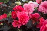 Flowers-Carlisle-City centre 1 small